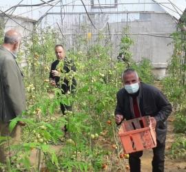 غزة: الإغاثة الزراعية تطلق المعرض الافتراضي الأول من نوعه في فلسطين