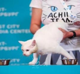 """القط """"أخيل"""" يتنبأ بالفائز من مواجهة روسيا وبلجيكا"""
