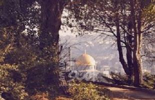 بلدية الاحتلال في القدس تسارع لوضع مخططات بناء استيطاني في الأحياء العربية