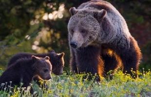 5 حقائق شيقة لا تعلمها عن الدببة
