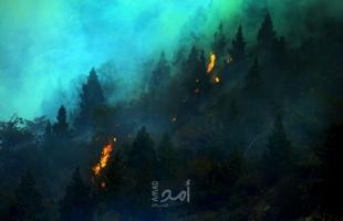 الحرائق تلتهم أكثر من 190 هكتار من الغابات في يوم واحد بالجزائر