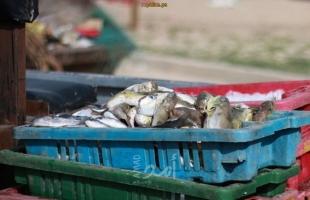 بحرية غزة تضبط (320) كيلو من الأسماك الملوثة