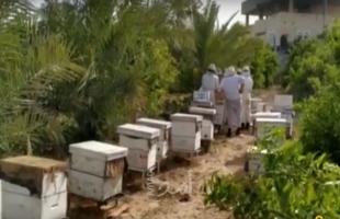 """بالفيديو .. مناحل العسل بغزة في ظل أزمة """"كورونا"""""""