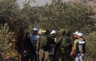 نابلس: مستوطنون يقتلعون (40) شتلة زيتون ويسرقونها في جالود