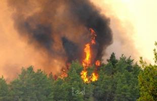 عناصر الإطفاء يسابقون الزمن لإخماد حرائق اليونان
