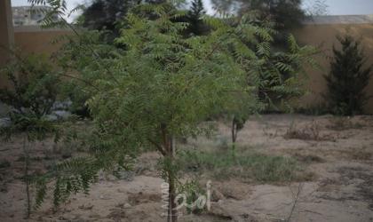 بالفيديو ..إيطاليان يبتكران كبسولة تحول جثة الإنسان لشجرة بعد الموت