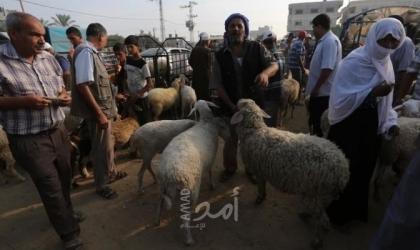 """زراعة حماس تعلن: غزة تضحي """"36 ألف"""" رأس من العجول والأغنام"""