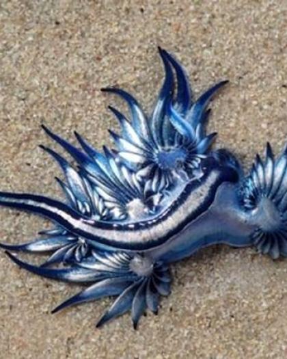 بالصور .. العثور على مخلوق غريب على شاطئ جنوب إفريقيا