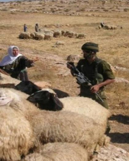 جيش الاحتلال يستولي على قطيع من الأغنام من مراعي جنوب الخليل